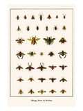 Bugs  Bees  and Beetles