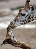 APTOPIX DEU Tiere Giraffenbaby