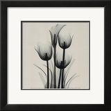 Tulips and Arum Lily