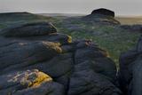 Dartmoor Haytor landscape