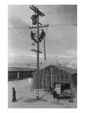 Line Crew at Work in Manzanar