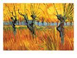 Pollard Willows at Sunset