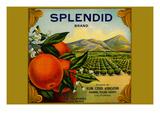 Splendid Brand Citrus