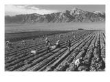 Farm, Farm Workers, Mt. Williamson in Background Reproduction d'art par Ansel Adams