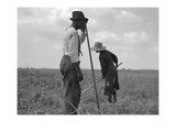 Cotton Sharecroppers