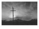 Birds on Wire  Evening