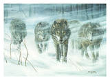 Wolfpack In Snowstorm Reproduction d'art par Don Li-Leger