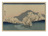 A Grove of Cherry Trees (Sakura Namiki Zu)