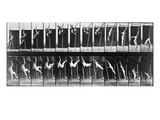 Muybridge: Photography