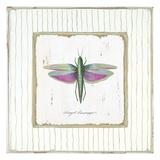 Winged Grasshopper