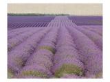 Lavender on Linen 2
