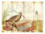 Dunes Shorebird
