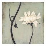 Ivory Blossom