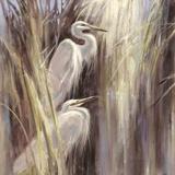 Seaside Egrets Reproduction d'art par Brent Heighton