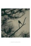 Caligraphy Bird I