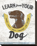 Learn From Your Dog