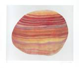 Striated Shell