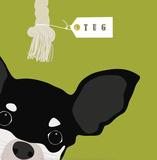 Peek-A-Boo: Chihuahua