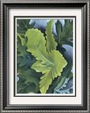 Green Oak Leaves  c1923