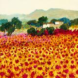 Sunflower Sunset  Tuscany