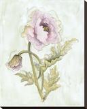 Lavender Poppy ll