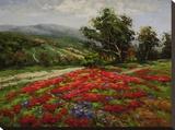 Meadow of Wildflower