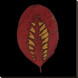 Smokebush Leaf on Black