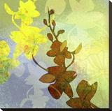 Orchid Shadows II