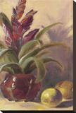 Bromelia Exotica