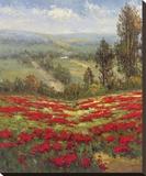 Poppy Vista II