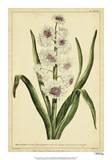 Hyacinthus  Pl CXLVIII
