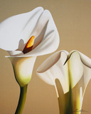 Smooth Lilies