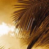 Light on Palms IV