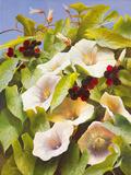 Convolvulus and Blackberries