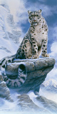 High Spirit - Snow Leopard Giclée par Kim Thompson