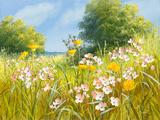 Cuckoo Flowers
