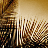 Light on Palms III