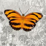Orange Butterfly I