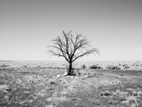 Arizona Tree Abstract Landscape Black and White  Two Guns Ghost Town