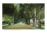 Pasadena  California - View Down Marengo Avenue
