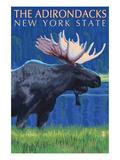 The Adirondacks  New York State - Moose at Night