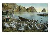 Santa Catalina Island  California - View of Sea Gulls at Avalon