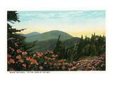 Blue Ridge Mountains  North Carolina - Mount Mitchelll Scene