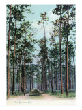Florida - View of Pine Barrens