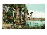 Florida - View of Swamps and Palms