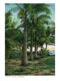 Florida - View of Royal Palms
