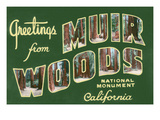 Greetings from Muir Woods National Monument  California
