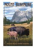 Black Hills  South Dakota - Bison Grazing