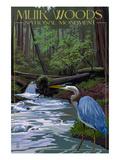 Muir Woods National Monument  California - Blue Heron