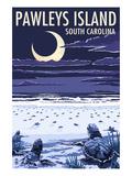 Pawleys Island  South Carolina - Baby Sea Turtles